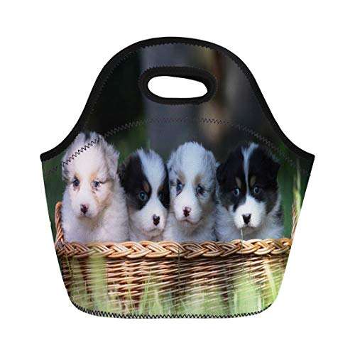 Semtomn Lunch Bags Puppy Dog Australian Shepherd Puppies Cute Animal Aussie Breed Neoprene Lunch Bag Lunchbox Tote Bag Portable Picnic Bag Cooler Bag