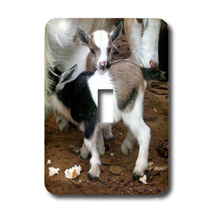3d Rose 3dRose LLC lsp_1285_1 Pygmy Goat Family Single To...