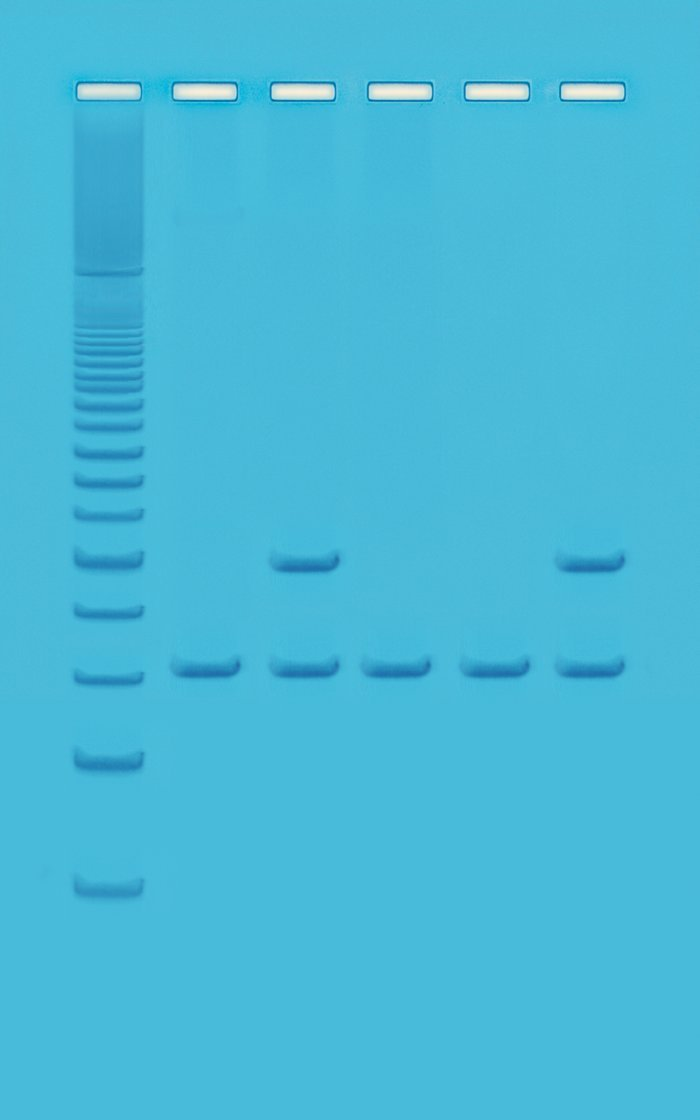 Edvotek 333 PCR Based Alu-Human DNA Typing
