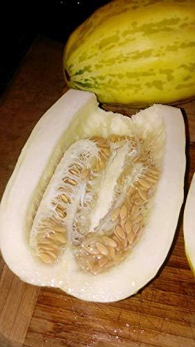 Asian Apple Melon - 30 Seeds - Vigorous Fruiting ()