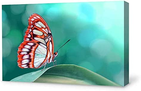 Beautiful Butterfly Painting for Bedroom Living Room
