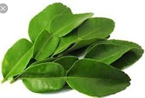 (2 Oz.) Fresh ORGANIC Kaffir Lime Leaves (Thai Lime Leaves)   FREE First Class Shipping from California