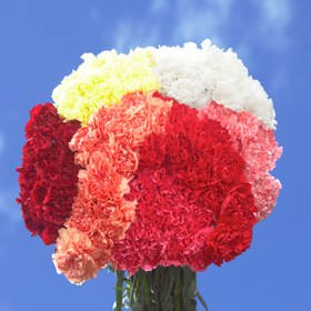 GlobalRose Assorted Color Carnations Select 300 by GlobalRose