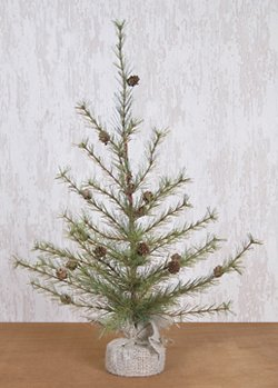 Cypress Pine Tree - 3' by BCD