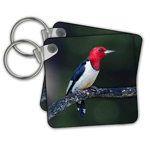 Stamp City - birds - A red-headed woodpecker on the branch of a tree posing for the camera. - Key Chains - set of 2 Key Chains (kc_290777_1)