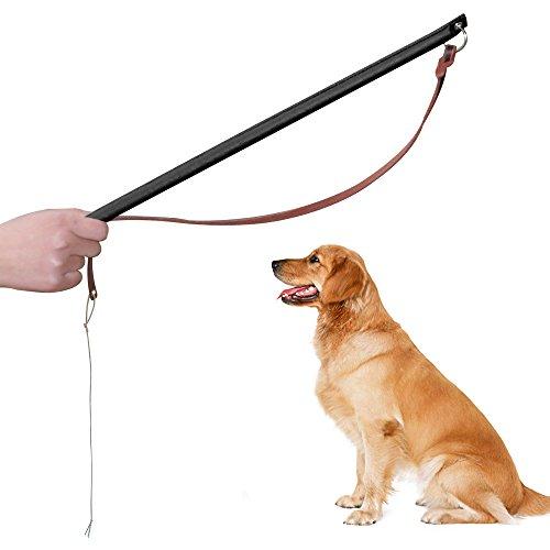 Schutzhund Dog Training - 6