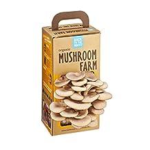 Back to the Roots Mushroom Farm, 1200gm
