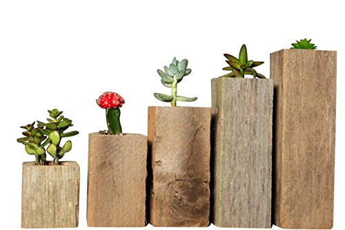 Set Box Planter - Succulent Planter Box Set Made from Reclaimed Wood - Perfect for Real or Faux Succulent Plants (Set of 5, Rustic)