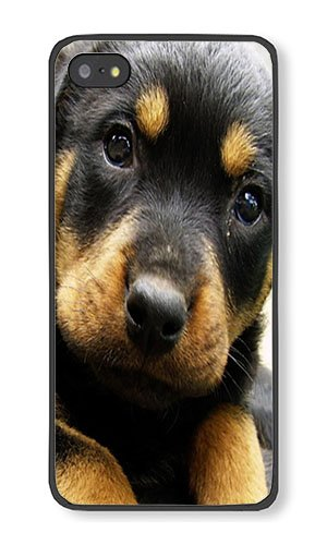 Amazoncom Iphone 5s Case Aoffly Rottweiler Puppy Black Pc Hard