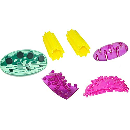 Organelle Structure Model Shows Microstructure of Mitochondria, Chloroplasts, Golgi, and Centrosome Junior High School Biology Instrument Teaching Instrument