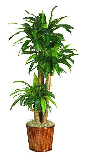 Artificial Plant -62 Inch Dracena with Basket Silk Plant