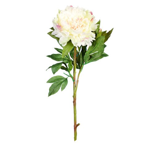 Better Crafts EVERYDAY LONGSTEM SATIN PEONY SPRAY X2 CREAM PINK 35 INCHES (12 pack) (0DC-7297-29-030)