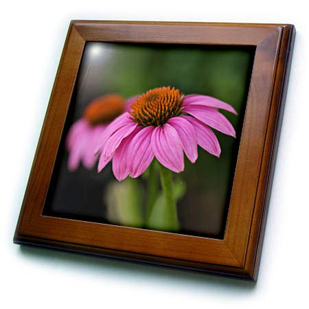 - 3dRose Stamp City - Flowers - A Macro Photograph of a Pair of Pink coneflowers. - 8x8 Framed Tile (ft_315550_1)