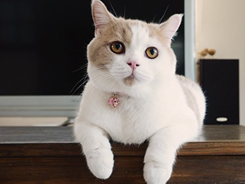 Necoichi Chirimen Cat Collar with Clover Bell (Pastel Pink) by Necoichi (Image #2)