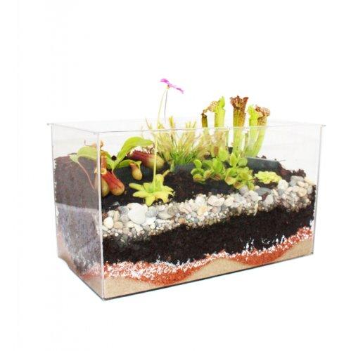 fleischfressende pflanzen im aquarium