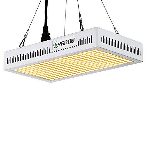 600W Led Light - 6