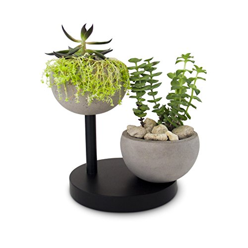 23 Bees Succulent, Cactus Concrete Planter Pot with Black Wooden Base | Decorative Air Plant Tillandsia Holder Bowl | Round Modern Contemporary Mini Container for Small Indoor Plants / Flowers (Stone Medium Air Round)