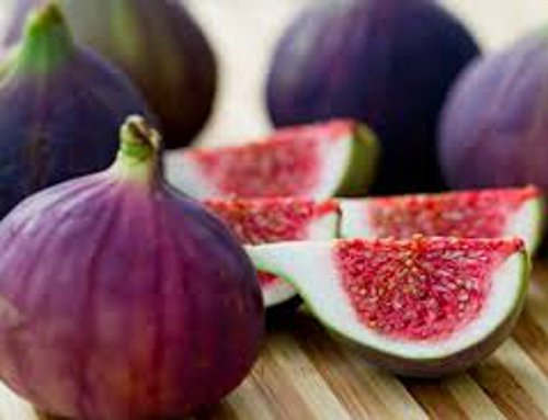"Fig Trees""Violette de Bordeaux"" Includes Four (4) Live Plants"