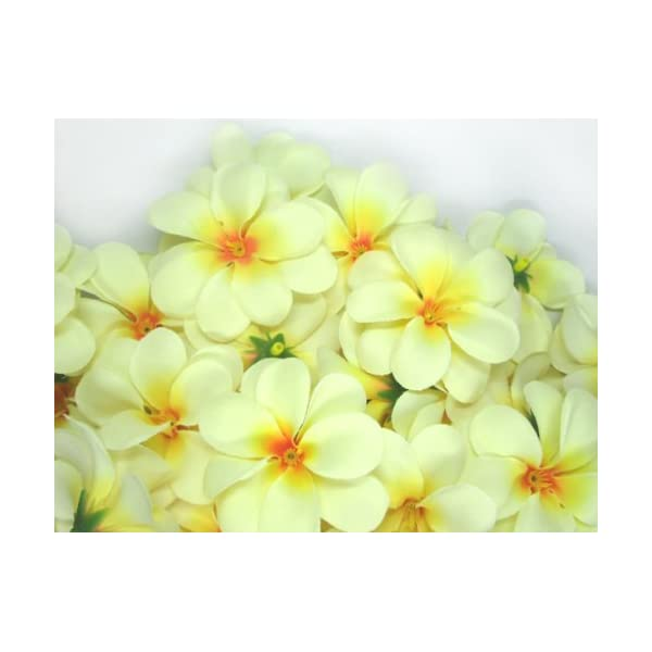 (100) Cream Hawaiian Plumeria Frangipani Silk Flower Heads – 3″ – Artificial Flowers Head Fabric Floral Supplies Wholesale Lot for Wedding Flowers Accessories Make Bridal Hair Clips Headbands Dress