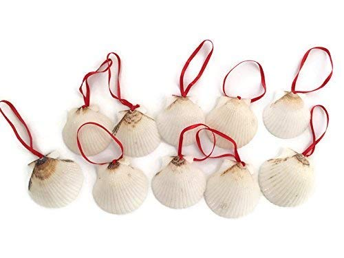 (White Glitter Seashell Christmas Ornaments with Red Ribbon, 10)