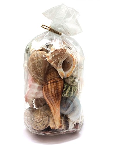 PEPPERLONELY Sea Shells Gift Bags filled with Natural Assorted Shells in Clear Gfit Bags, Various Sizes,1-1/4 Inch to 4 Inch, 16 OZ Bag of Approx. 40 PC Shells