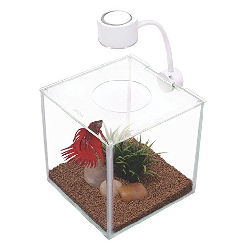 Marina CUBUS Glass Betta Kit (Acrylic Cube Aquarium)