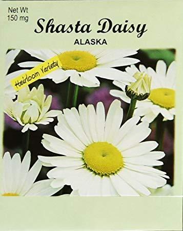 (Set of 50 Flower Seed Packets! Flower Seeds in Bulk (50, Shasta Daisy))