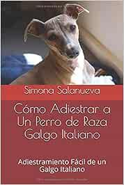 Cómo Adiestrar a Un Perro de Raza Galgo Italiano: Adiestramiento Fácil de un Galgo Italiano