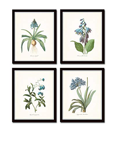 Redoute Blue Botanical Print Set No.7 Set of 4 Giclee Fine Art Prints - Unframed