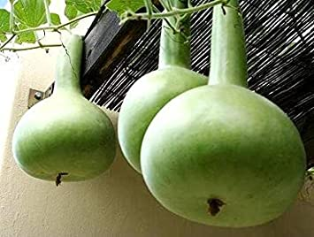 Image result for Bulb Vegetable Seeds