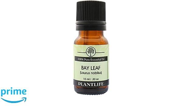 amazon com bay leaf 100 pure essential oil 10 ml health