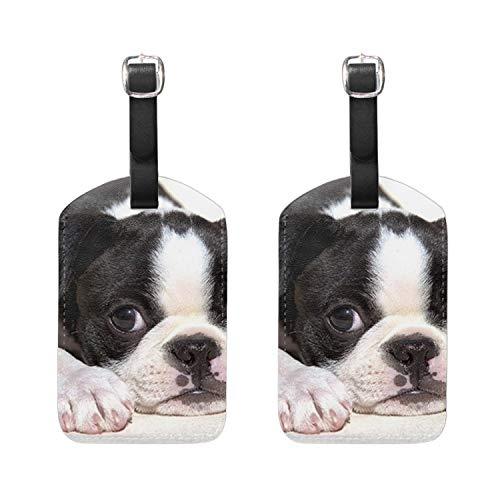 Cute Boston Terrier Luggage Tag Bag Identifier Travel Accessory 4.9 X 2.7 Inch (Terrier Luggage Tag Boston)