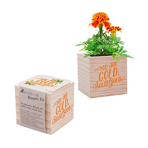 Real Desk Plant for The Office - Orange Marigold Plant Seed Packet, Peat Pellet, and Natural Pine Wooden 3x3 inch Cube Planter - Employee Appreciation Gift -