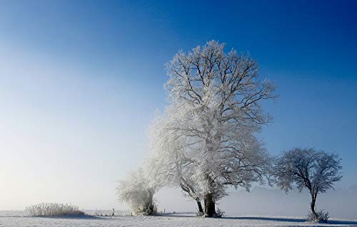 Home Comforts Canvas Print Cold Winter Frost Nature Snow Arbor Landscape Vivid Imagery Stretched Canvas 32 x 24