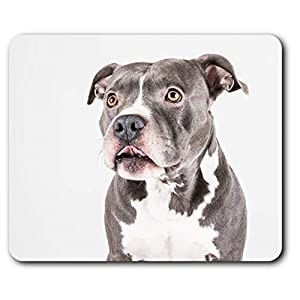 Comfortable Mouse Mat - American Pit Bull Staffy Terrier Dog 23.5 x 19.6 cm (9.3 x 7.7 inches) for Computer & Laptop, Office, Gift, Non-Slip Base - RM12382 1