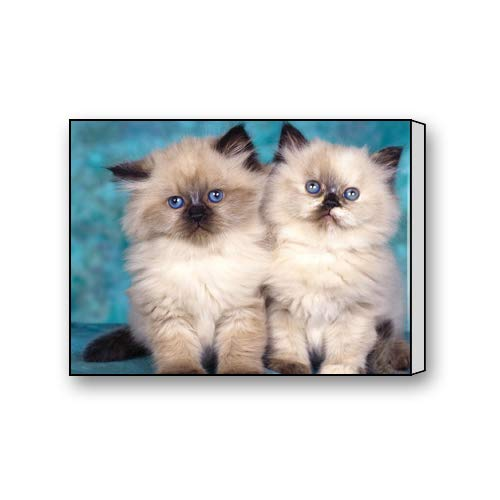 Flipped Summer Cute Himalayan Cat Art Paintings Canvas Prints for Living Room Bedroom Home Office Decor 10