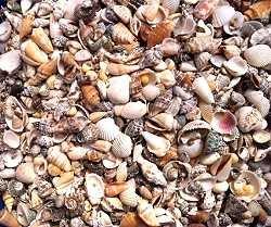 hinterland-trading-fairy-garden-tiny-seashells-250-sea-shells