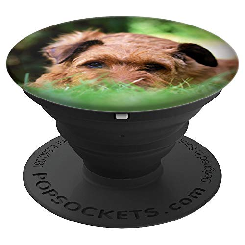 - Brown Irish Terrier Dog Breed Face Photo Pet Lover Animal - PopSockets Grip and Stand for Phones and Tablets