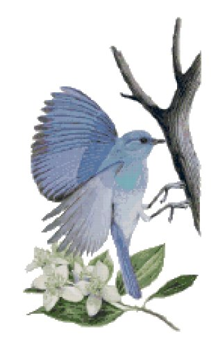 Idaho State Bird (Mountain Bluebird) and Flower (Mock Orange, Syringa) Counted Cross Stitch Pattern