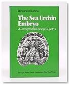 The Sea Urchin Embryo: A Developmental Biological System