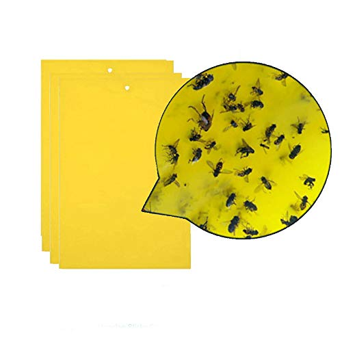 Fan-Ling 3Pcs Strong Flies Traps Bugs Sticky Board,Catching Aphid Insects for Flying Plant Insect Such as Fungus Gnats, Whiteflies, Aphids, Pest Killer ()