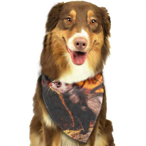 Classic Pet Dog Bandanas Lovely Ferrets in Autumn Washable Triangle Plaid Adjustable Dog Scarf Bow Tiess