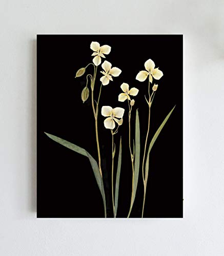 - Mariposa Lilies Botanical Print with Black Background Print - 5X7, 8X10, 11X14 or 16X20 Sizes - Unframed - Pressed Flower Art