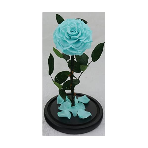 You want her to fall in love with you once again? Give this excellent gift to her! Preserved Real Rose Never Withered in Glass Dome, Gift for Valentine's Mother's Day Anniversary(Medium, Tiffany Blue)