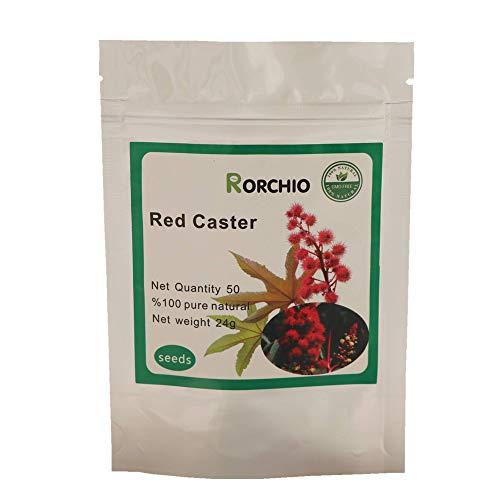 50 Red Castor Castor Bean Ricinus Communis Non-GMO Seeds ~ Chris's Garden