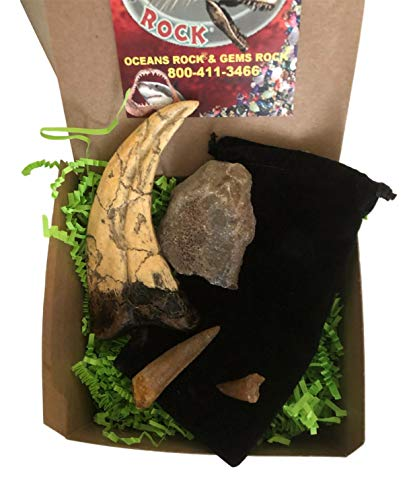 - DINOSAURS ROCK Dinosaur and Fossil Gift Collection - Set of 4 - Real Dinosaur Bone, Mosasaur Tooth, Spinosaurus Dinosaur Tooth and Raptor Claw Replica