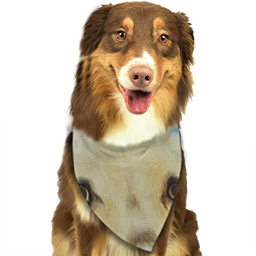FRTSFLEE Dog Bandana Yellow Labrador Dog Pet Scarves Accessories Decoration for Pet Cats and Puppies ()