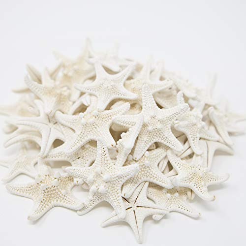 Tumbler Home Knobby Starfish | 1 to 2 Inch | Bulk Set of 50 Small Starfish | Beach & Wedding Decor