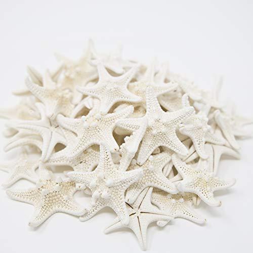 Tumbler Home Knobby Starfish | 1 to 2 Inch | Bulk Set of 50 Small Starfish | Beach & Wedding Decor