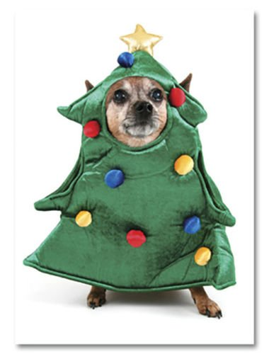 Chihuahua Dog in Christmas Tree Costume ~ Box of 12 Holiday Greeting Cards CUTE!